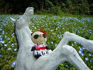 ばぶちゃんお花畑で白馬に乗る