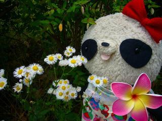 ばぶちゃんお花とパチリ