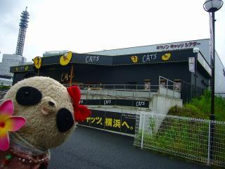 キャッツ横浜公演に行ってきた