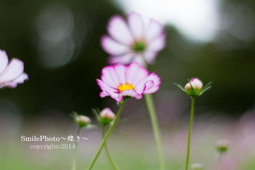 IMG_8909.jpg