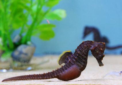 080407-seahorse-photo_big.jpg