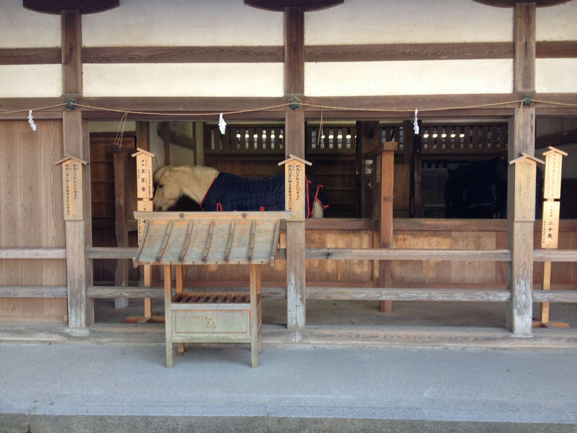 写真 2012-12-10 10 53 58