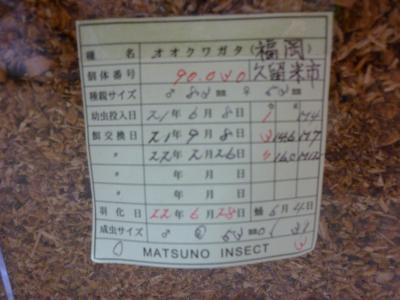マツノ53mm管理票