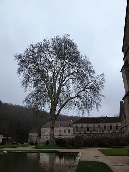 フォントネーの木
