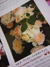 20120804-7.jpg