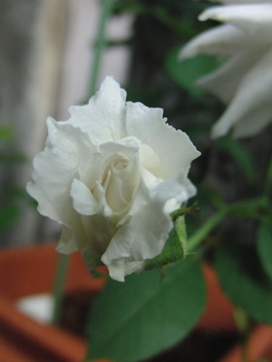 20110724