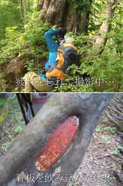 suzudai2010060512.jpg