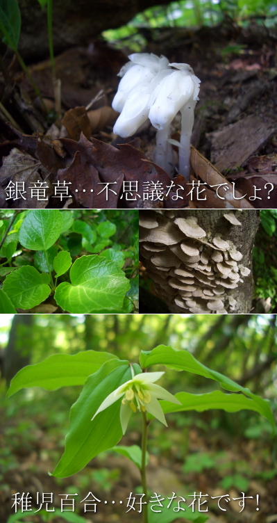 suzudai2010060516.jpg