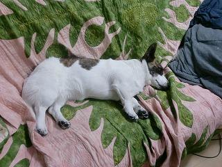 ソファーで、寝れるって、幸せ!byたまこ