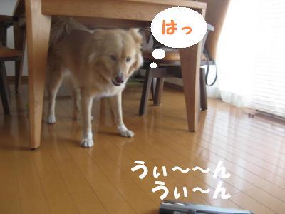 305_convert_20111024152737.jpg