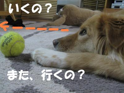 458_convert_20111211215344.jpg