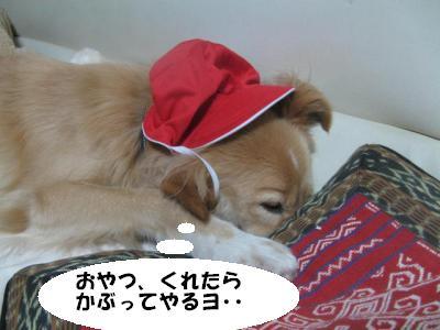 543_convert_20120114172740.jpg