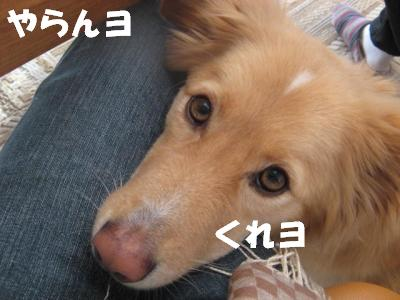 8592_convert_20111224225045.jpg
