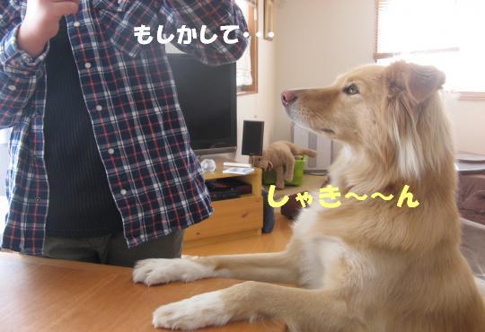 9001_convert_20120130210352.jpg