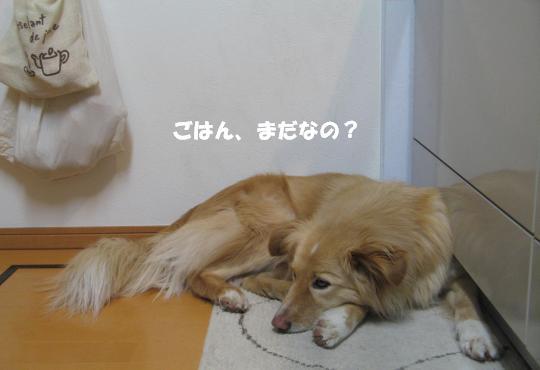 9570_convert_20120309200650.jpg