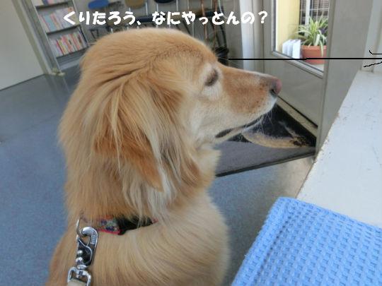 CIMG1151_copy.jpg