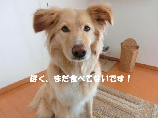 CIMG1921_copy.jpg