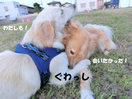 CIMG1931_copy.jpg