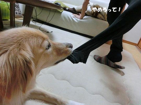 CIMG4621_copy.jpg