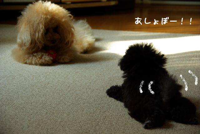 Lily2日目 075