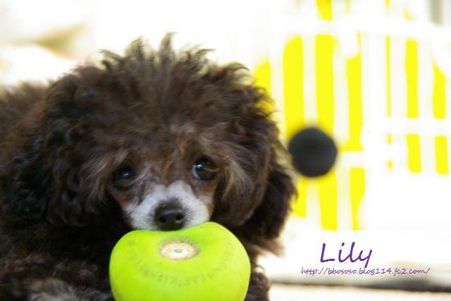 Lily7日目 153