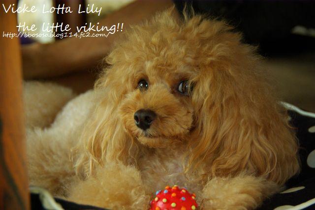 Lily2日目 257