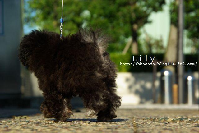 lily1stチョンチョコリン 252