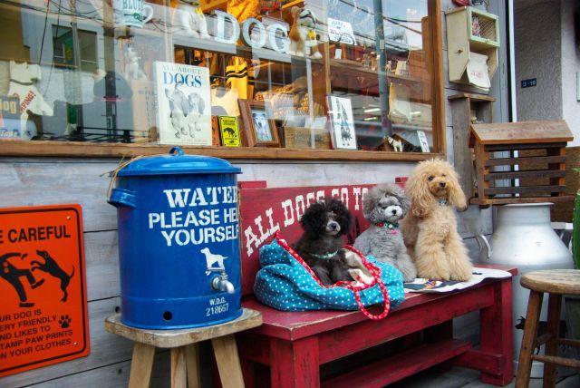 water dog garden 307
