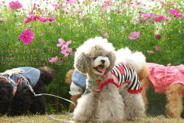 昭和記念公園 290