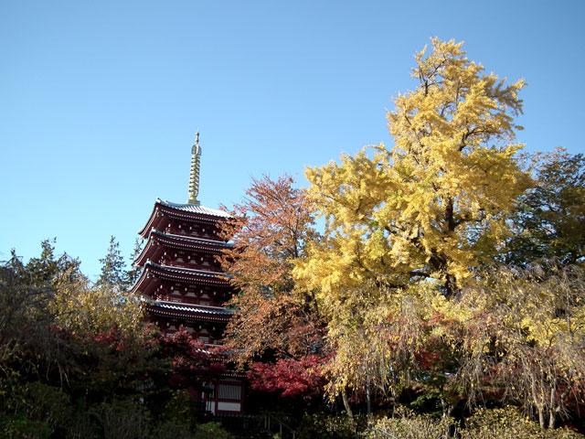 本土寺の紅葉(1)