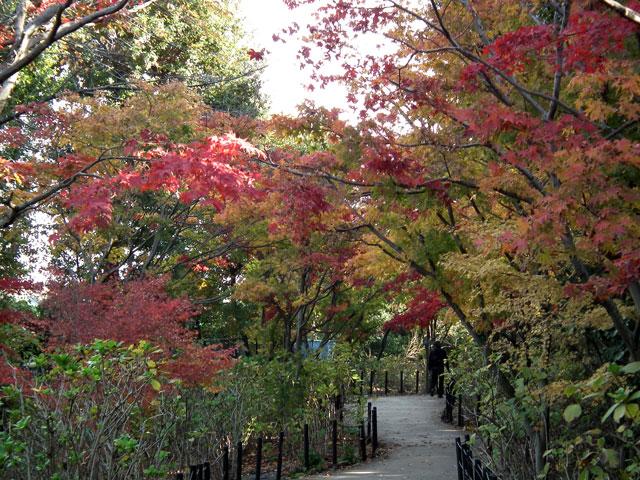 本土寺の紅葉(2)