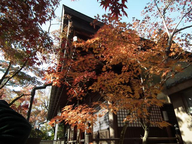 本土寺の紅葉(4)