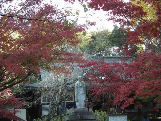 本土寺の紅葉(6)