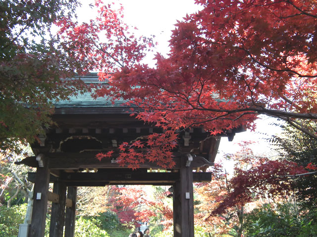 本土寺の紅葉(7)