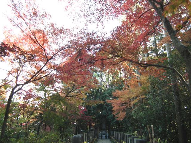 本土寺の紅葉(9)
