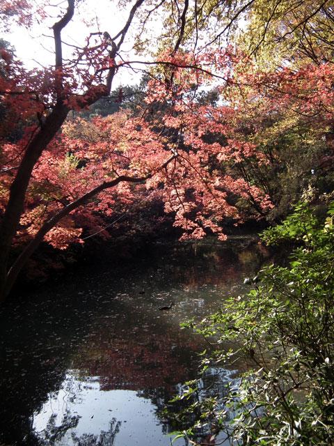 2013年 六義園の紅葉(1)