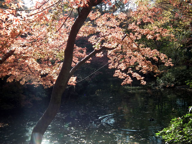 2013年 六義園の紅葉(3)