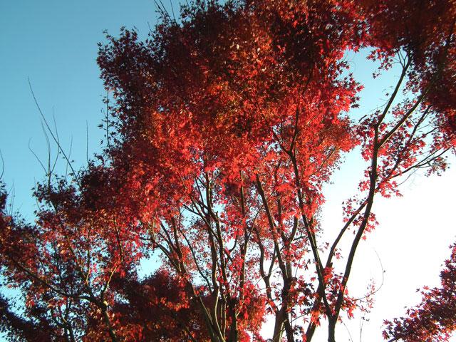 相模湖湖畔の紅葉(2)