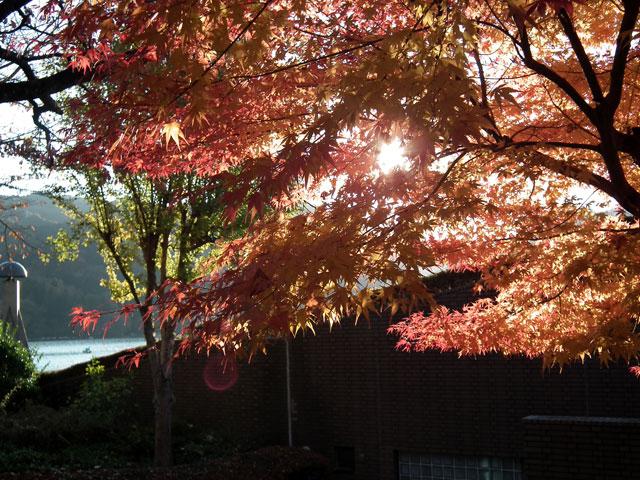 相模湖湖畔の紅葉(3)
