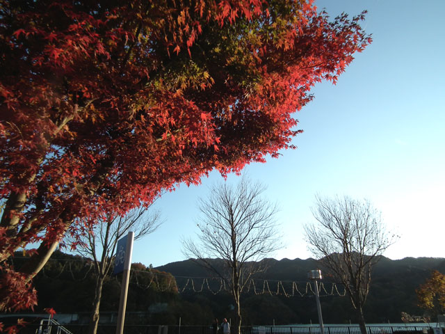 相模湖湖畔の紅葉(5)