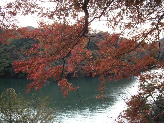 相模湖湖畔の紅葉(8)