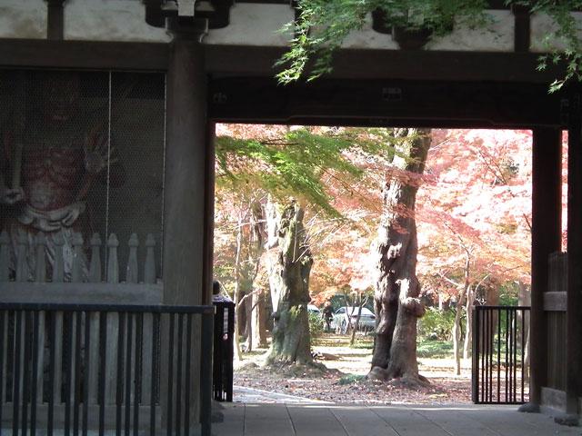2013年 松戸・東漸寺の紅葉(1)