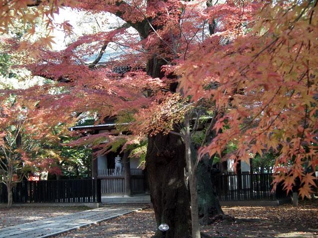 2013年 松戸・東漸寺の紅葉(2)