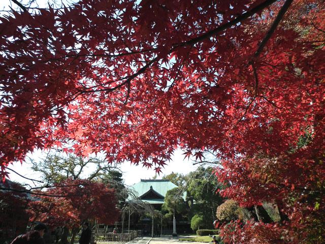 2013年 松戸・東漸寺の紅葉(3)