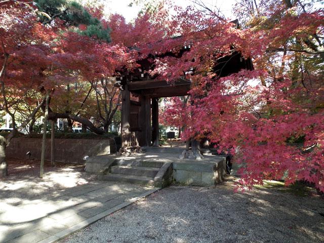 2013年 松戸・東漸寺の紅葉(4)