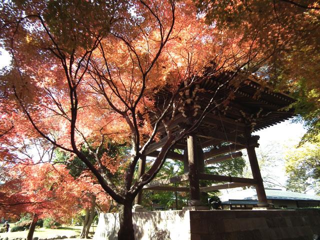 2013年 松戸・東漸寺の紅葉(5)