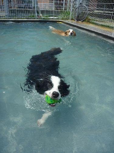泳ぐ泳ぐ~