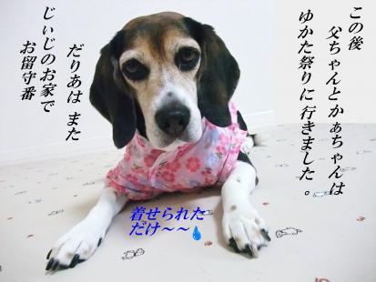 コピー ~ DSCF9491