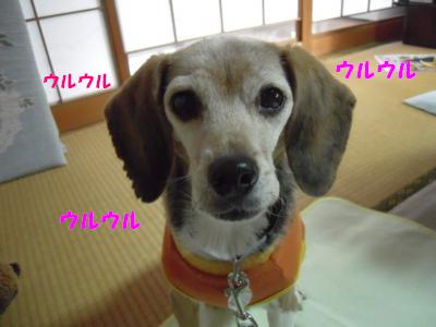 ai-0101-jikka01.jpg