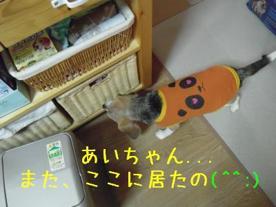 ai-0210-kicchin01.jpg